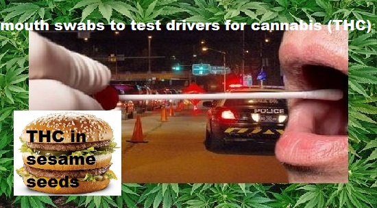 check drivers for cannabis
