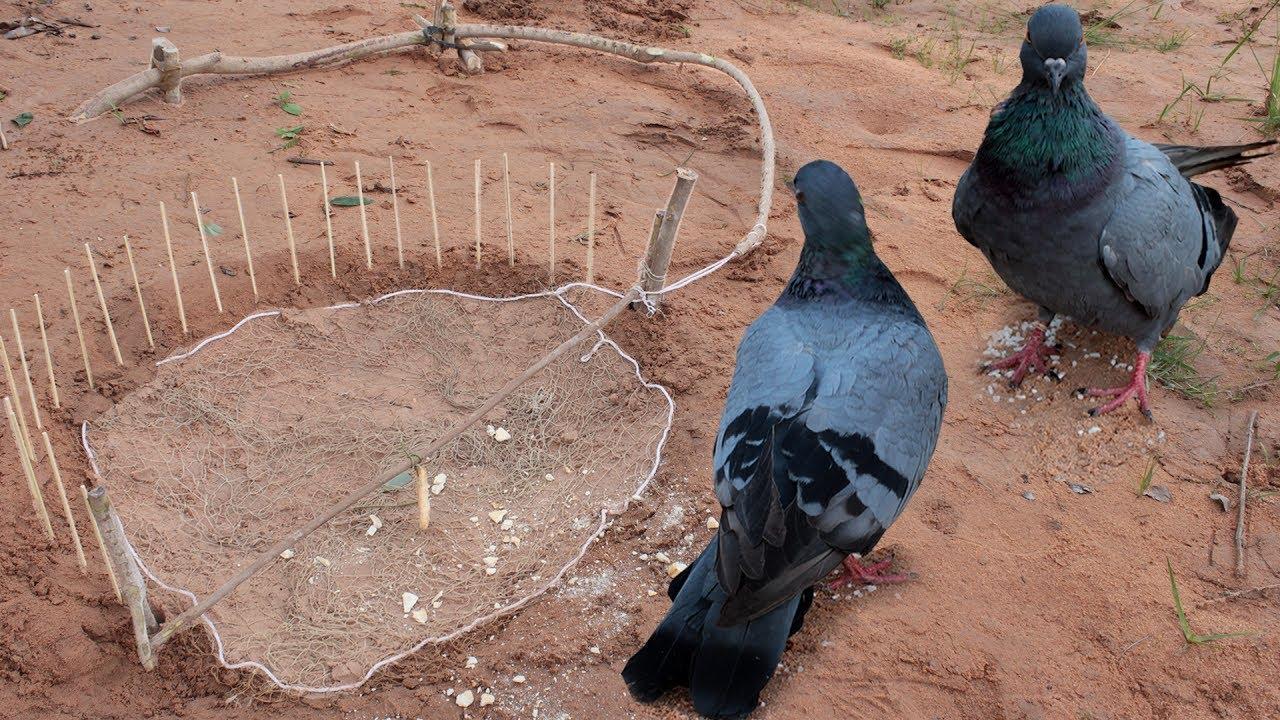 Ağ kullanarak yapılan kuş kapanı son derece başarılı sonuçlar verebilir.