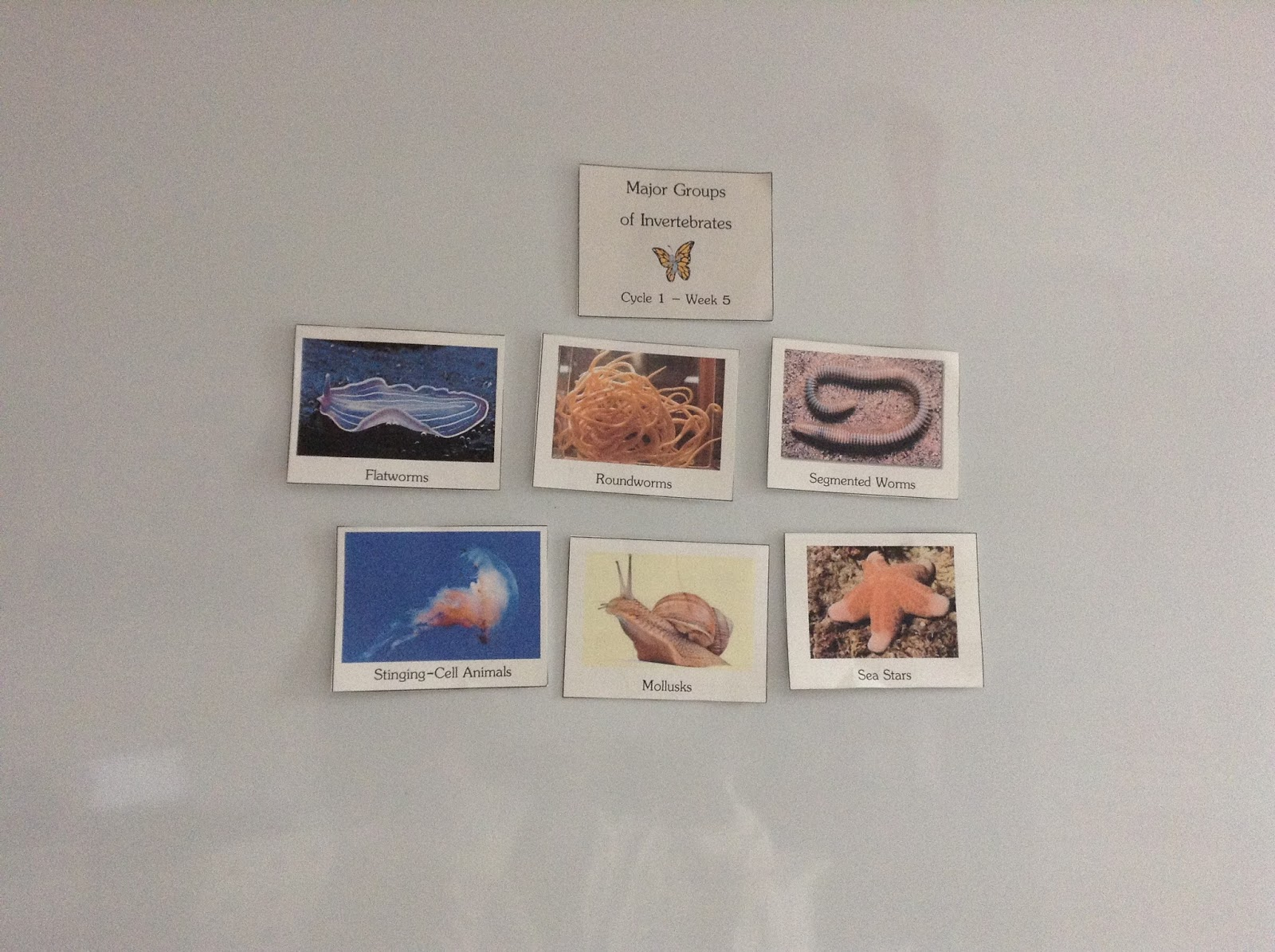 Teachermomplus3 Vertebrates And Invertebrates Unit Study