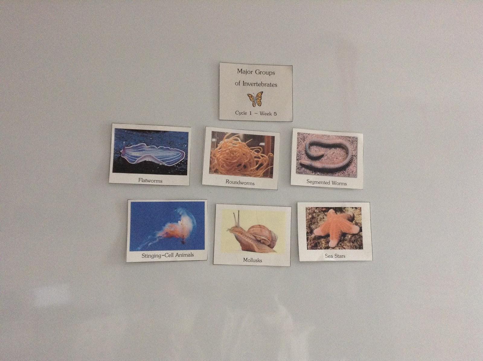 Teachermomplus3 Vertebrates And Invertebrates Unit Study