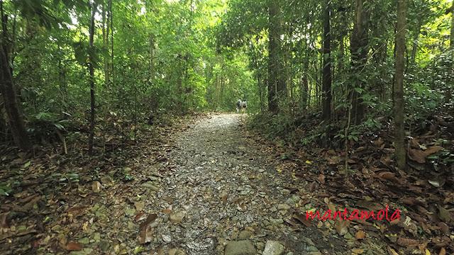 Singapore Nature reserve