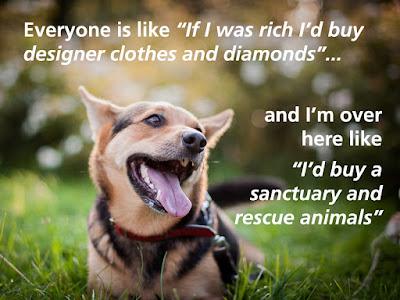 dog sanctuary rescue