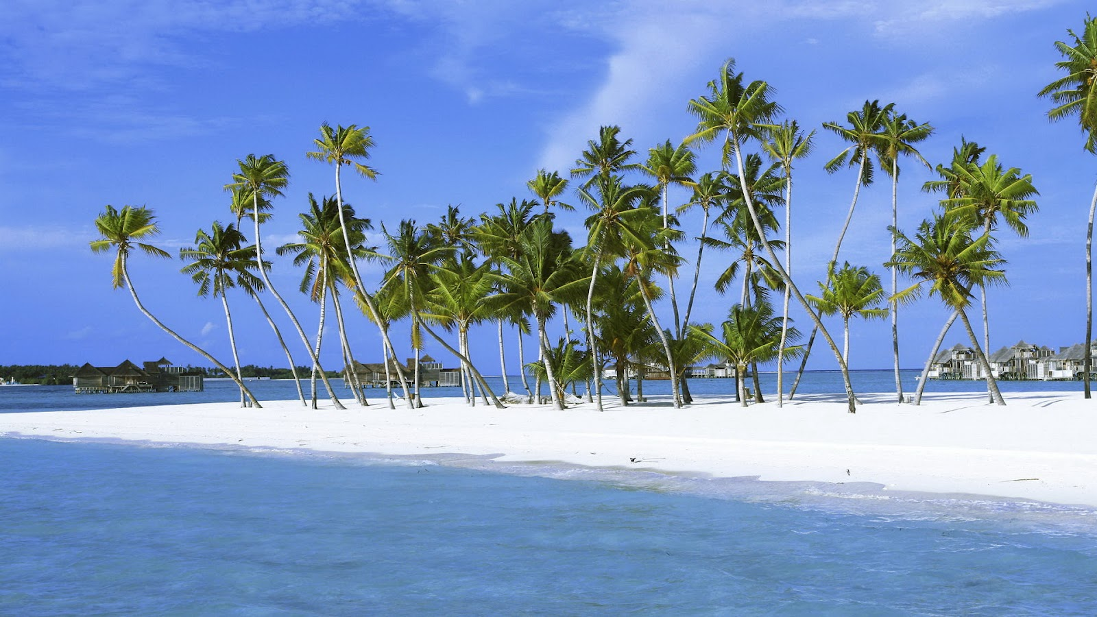 10 Most Popular Beautiful Beach Backgrounds Palm Trees: Beach Scenes For Desktop