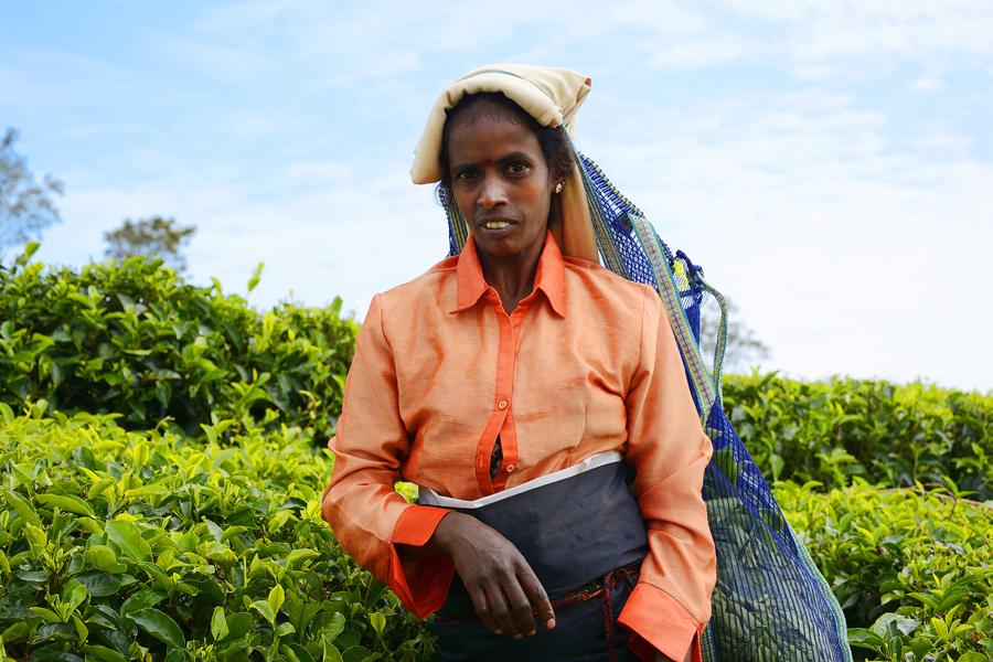 Tamilki podczas pracy