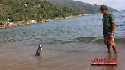 البطريق الوفي، عالم العجائب