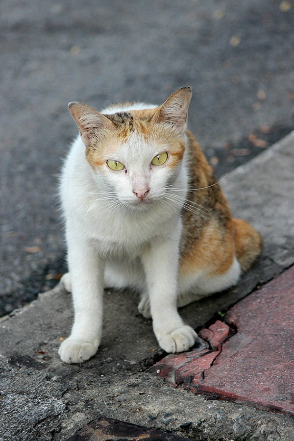cats of bangkok