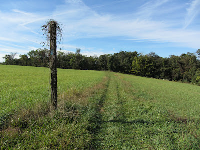 Blue trail marker in the middle of the field