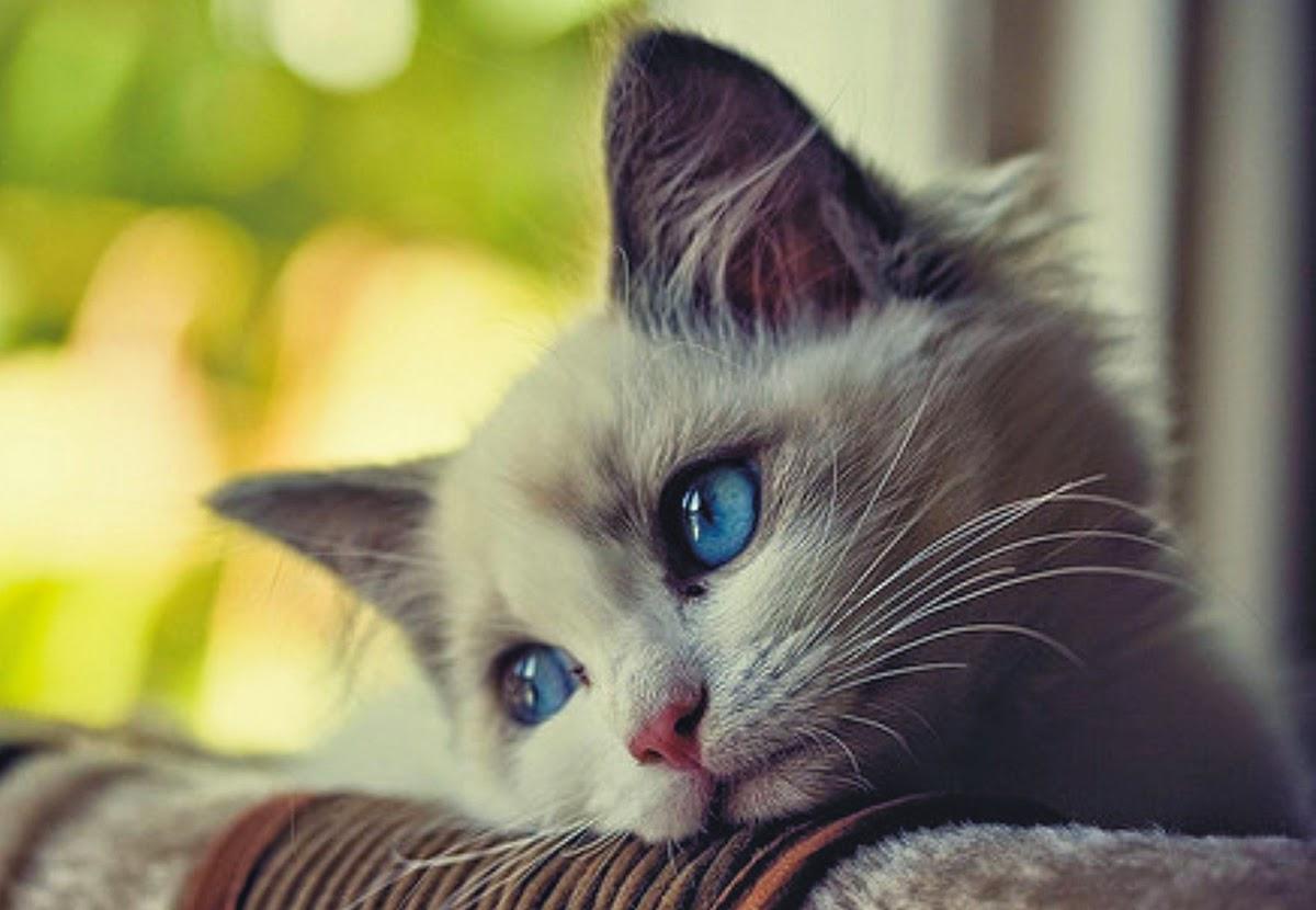 funny absurd: Sad face animals Sad Animal Face