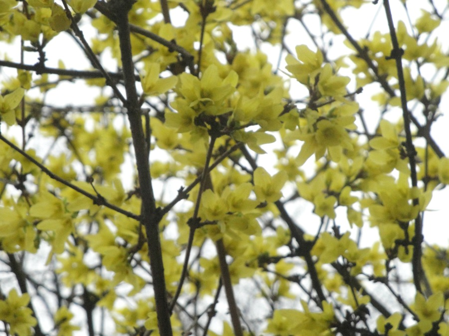 A close up of some bright yellow blossom.
