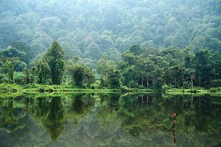 Negara-Negara dengan Luas Hutan Terbanyak di Dunia