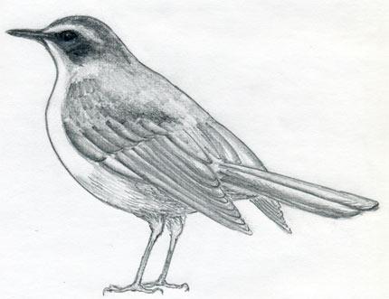 Corso Di Grafica E Disegno Per Imparare A Disegnare Come