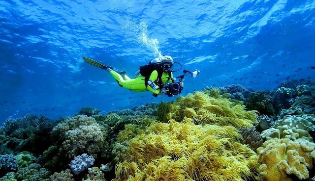 Menyelam di Wakatobi