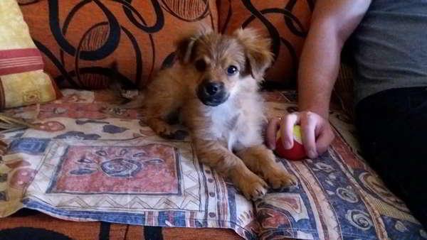cachorra de tamaño pequeño