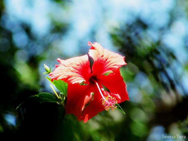 photovanes, flores, folhas,  8on8, natureza, galhos, árvores, céu, vida, vanessa vieira, fotografia, vanessa vieira fotografia