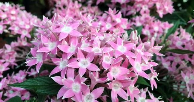 Colores Flores En Julio