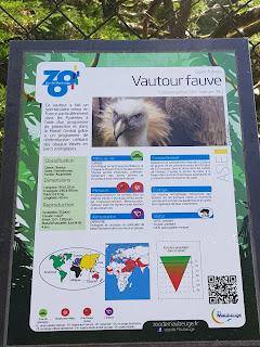 panneau-de-presentation-du-vautour-fauve