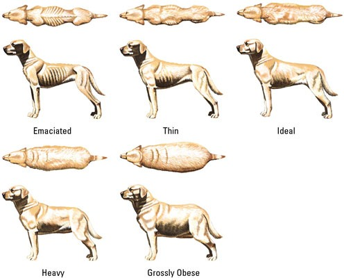 Weight Loss In Pets
