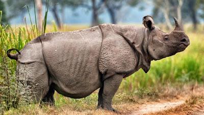Peta Sebaran Fauna Indonesia Menurut Wallace