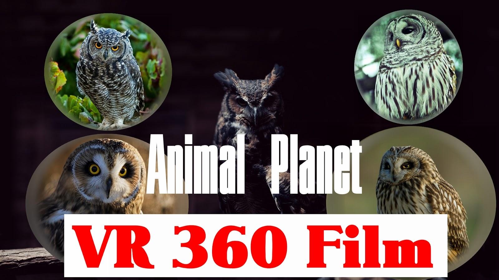 Vr 360 Animal Planet Owl Storytelling Film 3d Animation