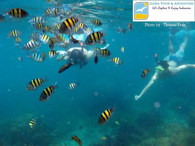 foto snorkeling di pahawang eloratour