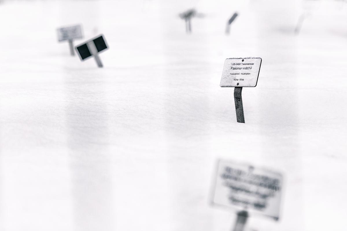 Helsinki, Suomi, Finland, Myhelsinki, Discoverhelsinki, discoverfinland, experiencefinland, valokuvaaja, photographer, Frida Steiner, Visualaddict, visualaddictfrida, valokuvaus, outdoors, outdoorphotography, winter, offseason