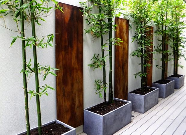 How to grow bamboo in pots?