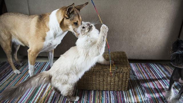 ¿Gatos o perros? Científicos determinan quién de los dos es más inteligente