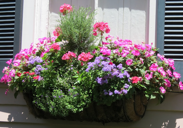 charleston sc flowers window box top gardens