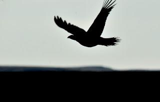 空を飛ぶ鳥のシルエット