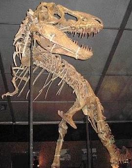Foto de un Tarbosaurus formado por huesos