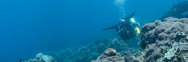 Best dive spots in Doljo point Panglao Bohol Island Philippines 2018 and famous diving spots for corals,shark,dolphin,whales,turtles,fish,sardines and sea snakes
