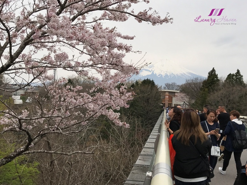 catch cherry blossom at gotemba premium outlet shopping