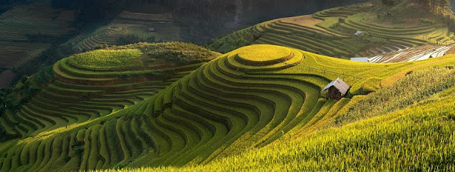 The Week of Culture, Tourism Festival to explore the national scenery Terraced fields in Mu Cang Chai 2017