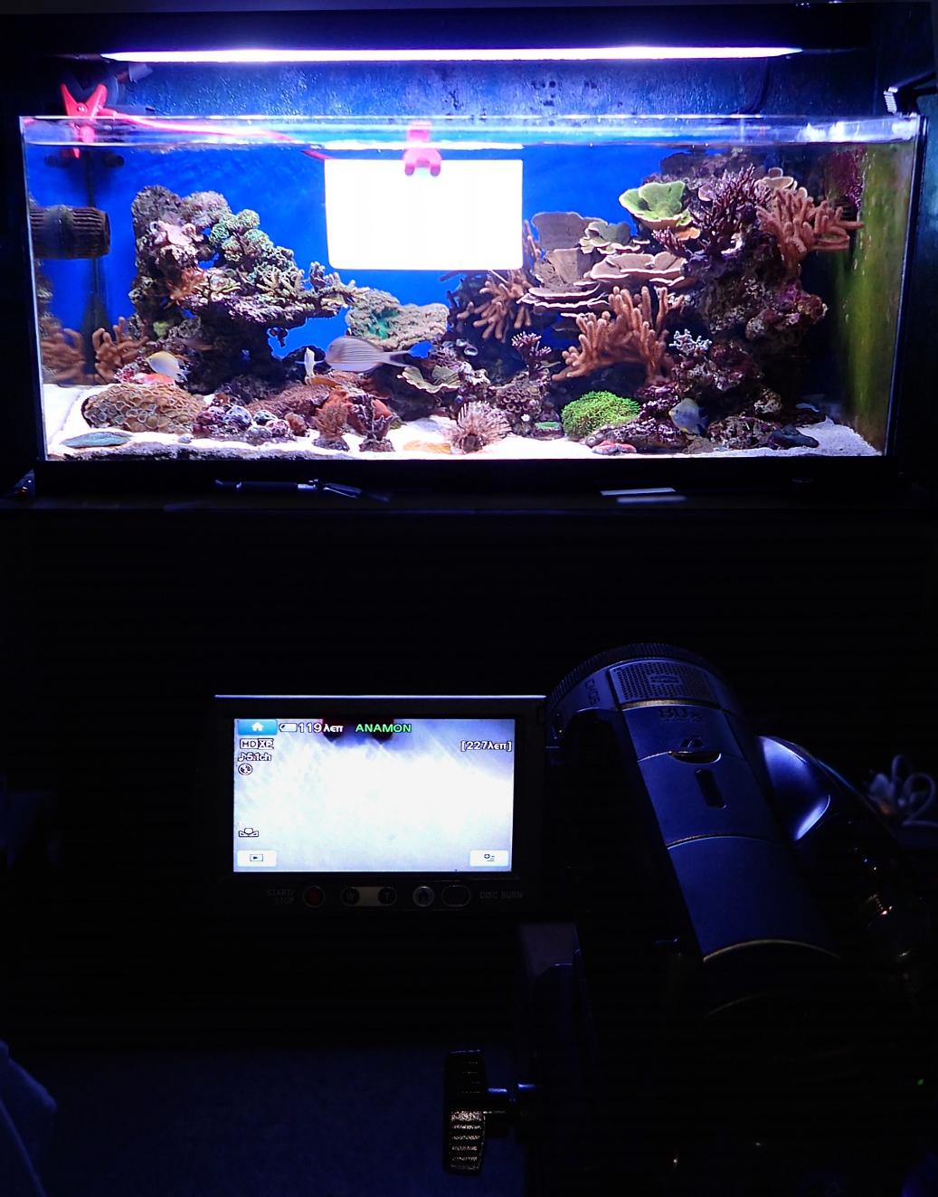άνθρακα dating κοράλλια