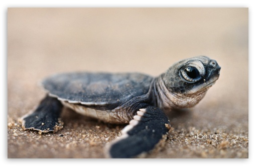 Funny 3d Animal Turtle Wallpapers Hd: Funny Turtle Wallpaper Widescreen
