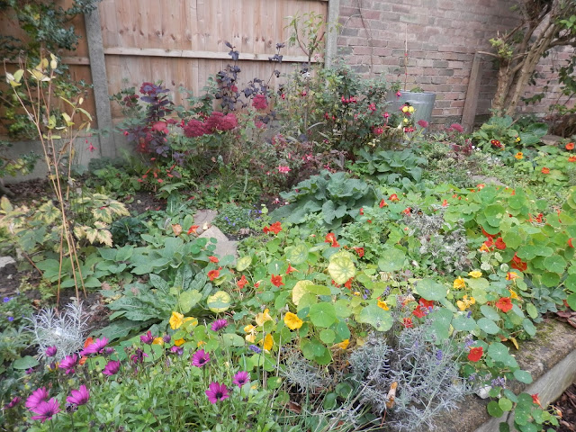 Diary of a suburban edible garden, October 2017. By UK garden blogger secondhandsusie.blogspot.com #gardenblogger #suburbangarden #permaculturegarden #organicgarden