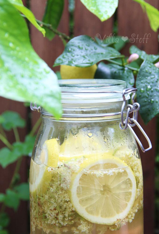 Rezept | Holunderblütensirup ohne Zitronensäure selbermachen