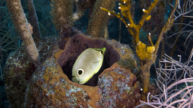 Todos somos descendientes de las esponjas de mar, afirman los científicos