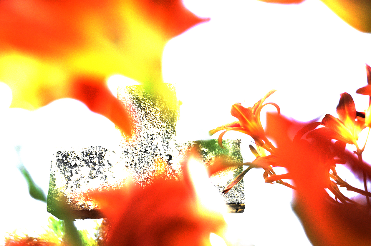 Photographs from a white space meditation on what a flower is meditation on what a flower is tiger lilies iv izmirmasajfo