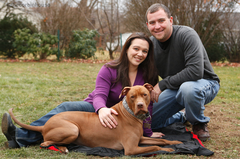 Corbin, the rescued pitbull explains why you should adopt a senior dog