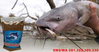 Umpan Ikan Lele