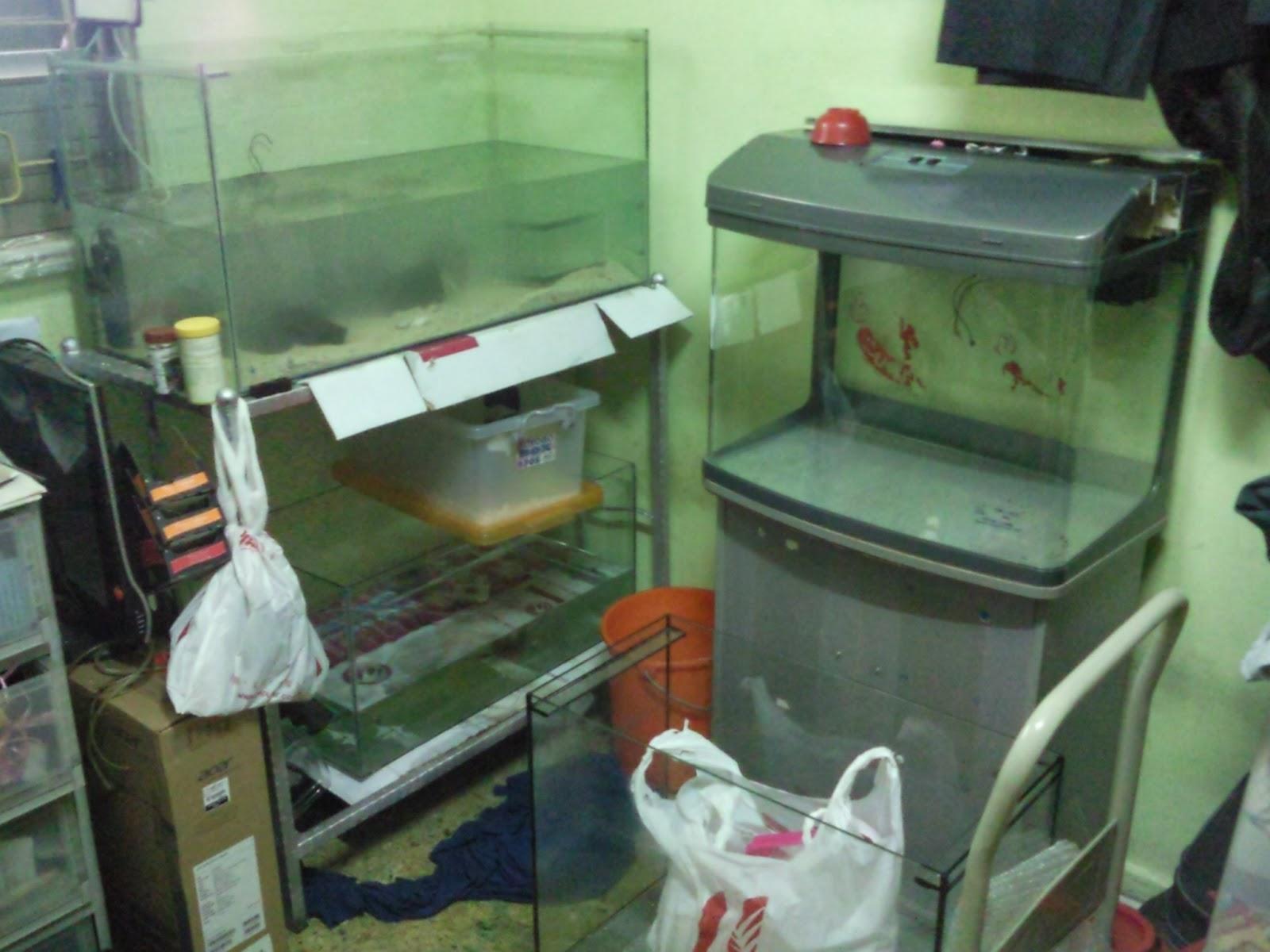 Fish Tanks And Aquarium CRS: Aquarium Home Multiple Fish Tanks Setup