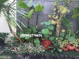jual tanaman sente hitam dan pembuatan taman
