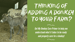 Donkeys are the best livestock guardians for chickens!