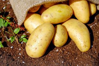 Πώς αποθηκεύουμε τις πατάτες και τι πρέπει να προσέχουμε;