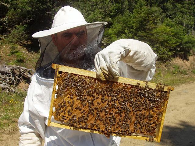 Αποτέλεσμα εικόνας για Σε απόγνωση οι μελισσοκόμοι στην Αρκαδία»