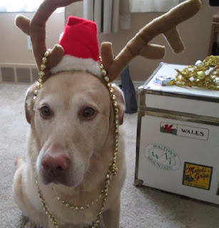 dog in Christmas hat and antlers