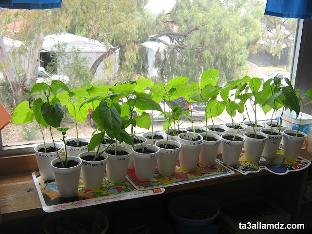 Keep plants in the classroom