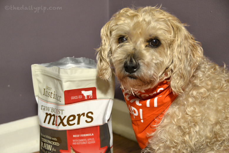 Ruby, the rescued Yorkie-Poo, loves Nature's Variety Instinct Raw Boost Mixers