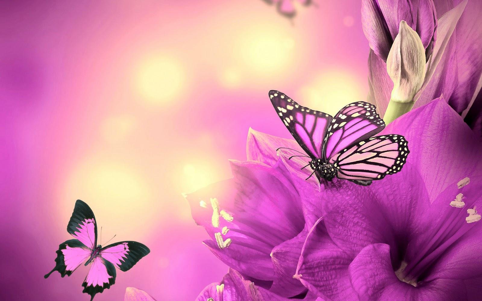 Roze vlinders en roze bloemen in de lente